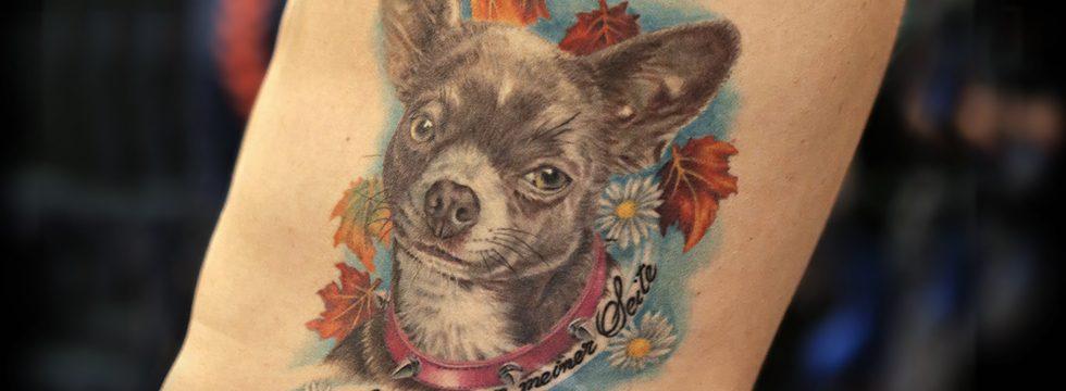 miss nico allstyletattooberlin allstyletattoo chihuahua portrait dogportrait realistictattoo tattoo